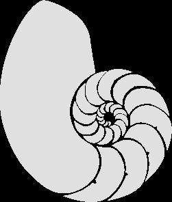 Concha de nautilus