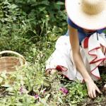 remedios-de-la-tierra (3)