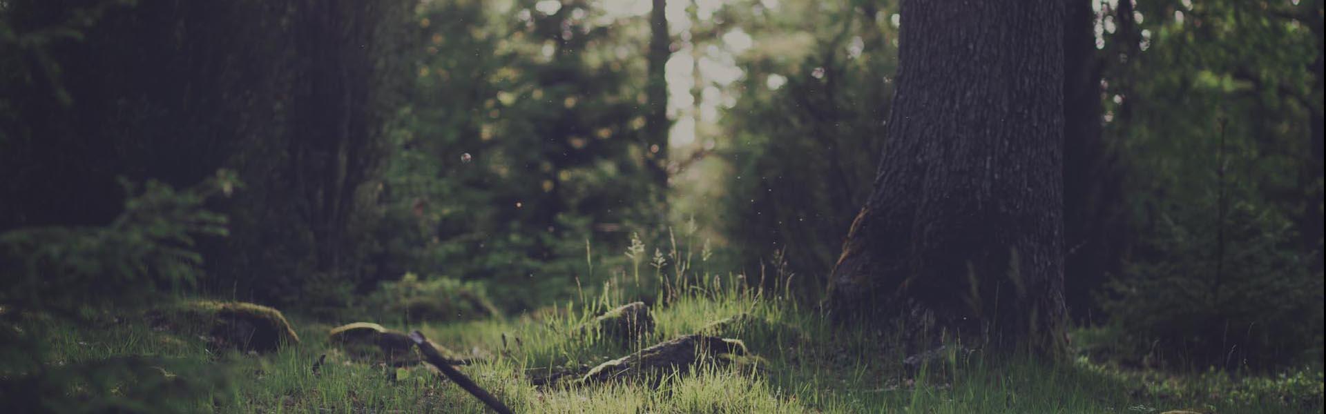 Primer plano de un camino en el bosque